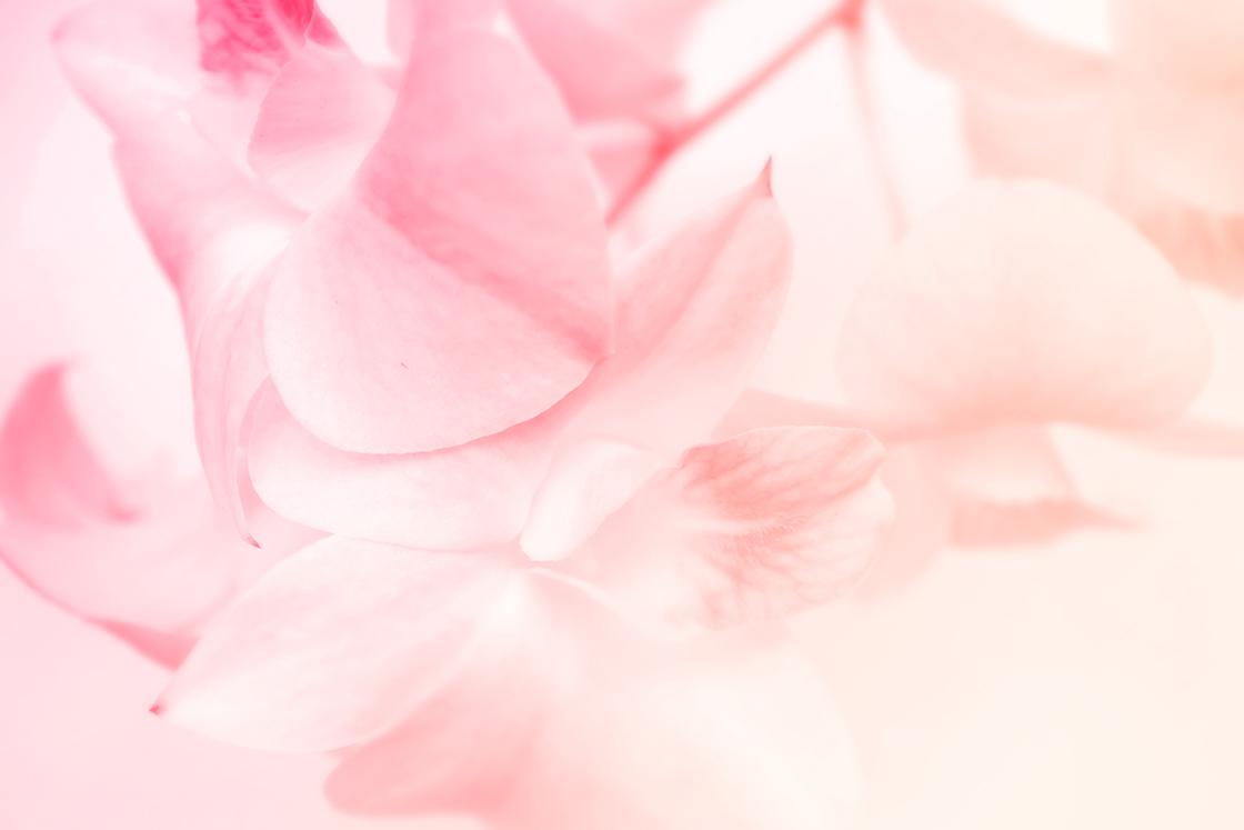 petals_bg_239470879